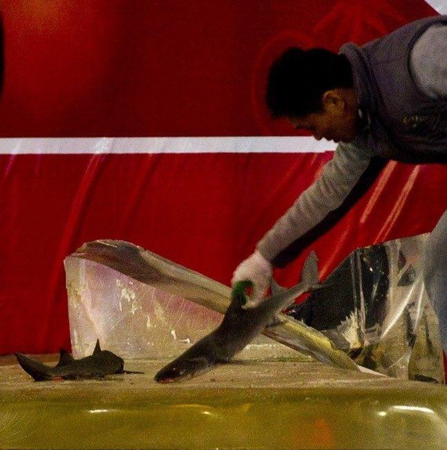 Shark Aquarium Accident (19 pics)