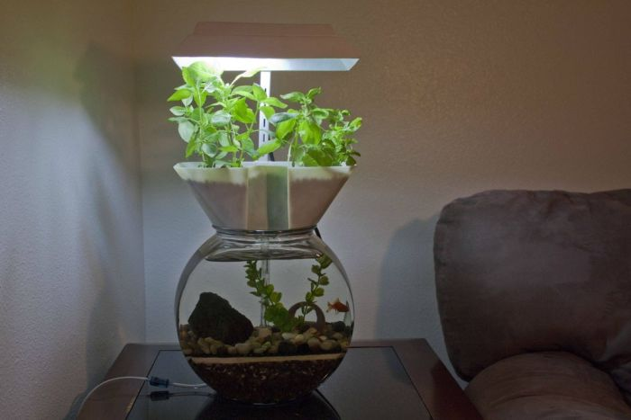 Self-Cleaning Aquaponic Aquarium (6 pics)