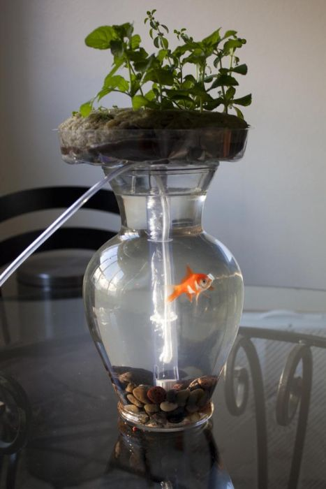 Self-Cleaning Aquaponic Aquarium (6 pics)