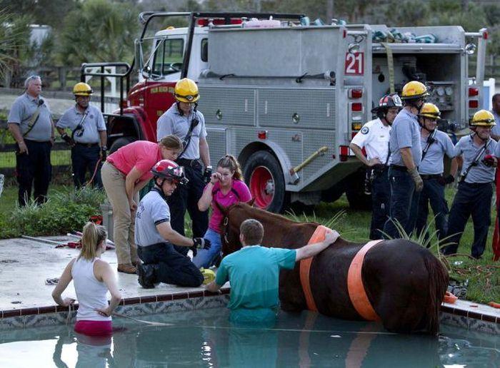 Horse Rescue (7 pics)