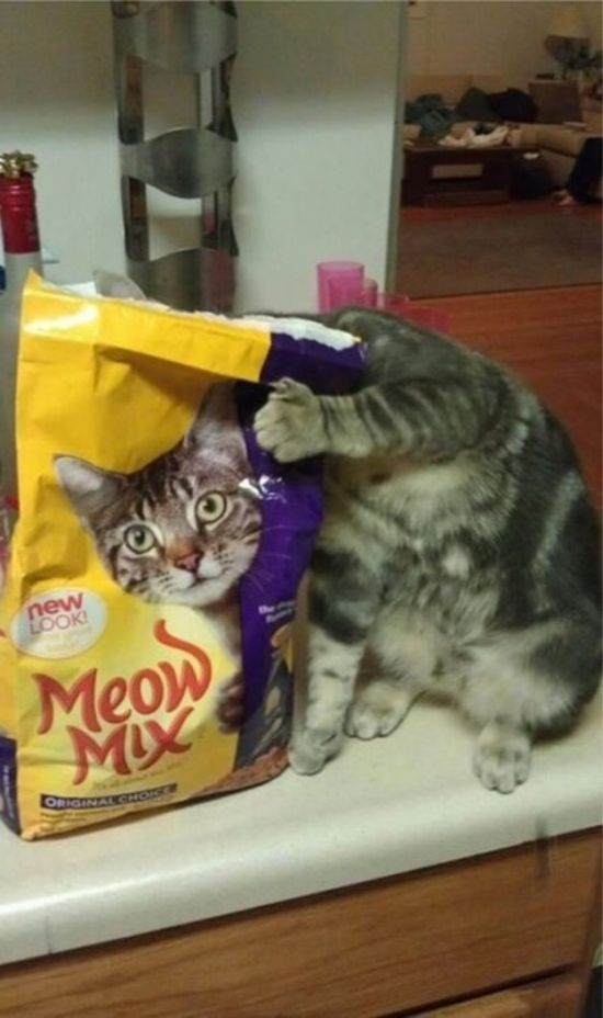 Perfectly Timed Cat Photos (25 pics)