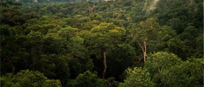 The Beauty of Amazon Forest (46 pics)