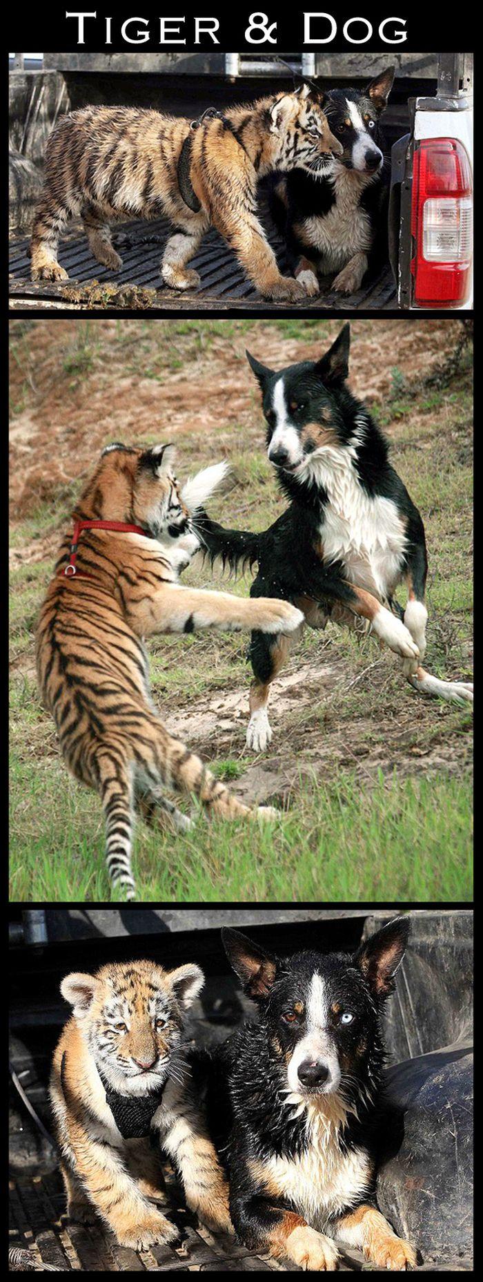Cute Interspecies Friends (30 pics)