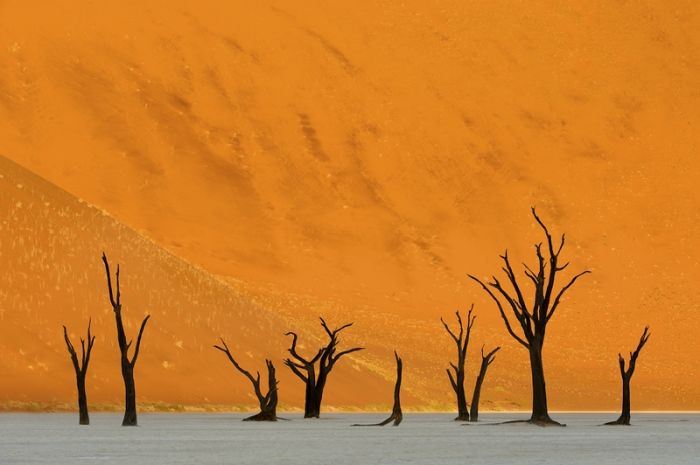The Winners of 2012 International Photography Award (25 pics)