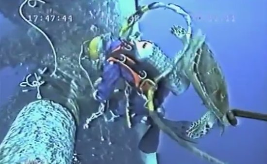 Sea Turtle Falls in Love With Scuba Diver