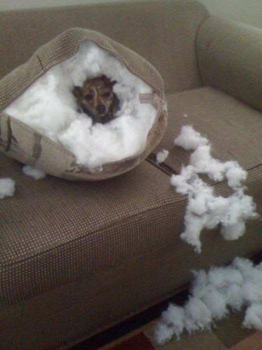 WTF and Funny Animal Pics of the Year (52 pics)