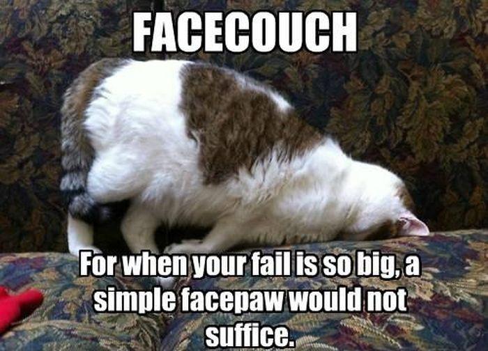[Image: caturday_cat_memes_09.jpg]