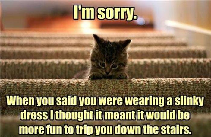 caturday_cat_memes_11.jpg