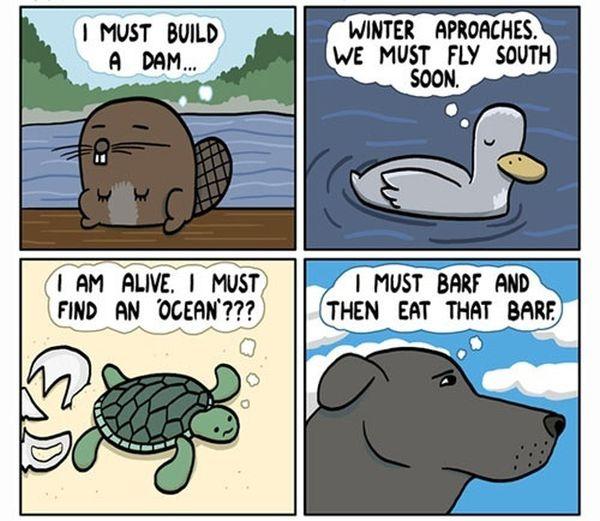 Random Funny Pictures (57 pics)