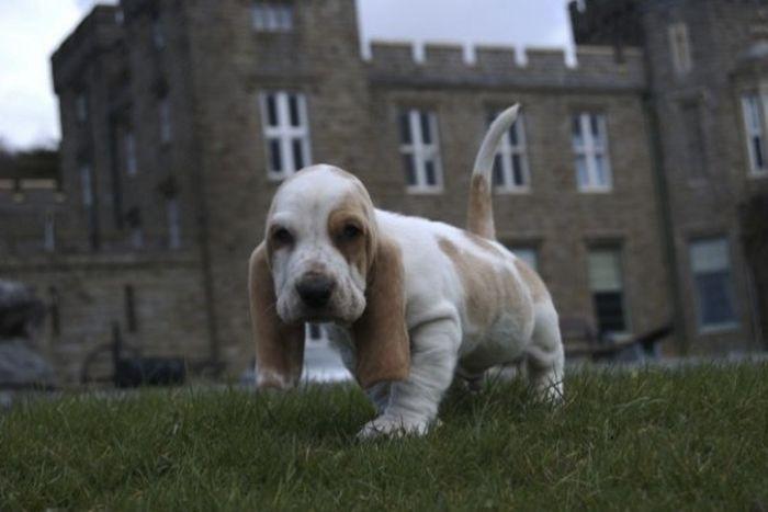 Cute Puppies (50 pics)