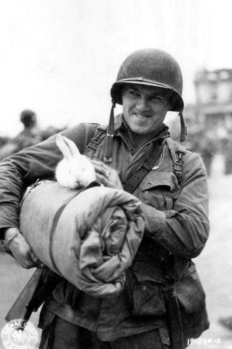 Soldiers' Best Friends (52 pics)