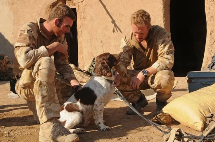 Soldiers' Best Friends (52 pics)