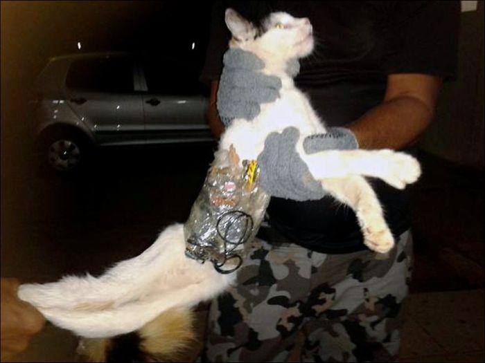 Smuggler Cat (2 pics)