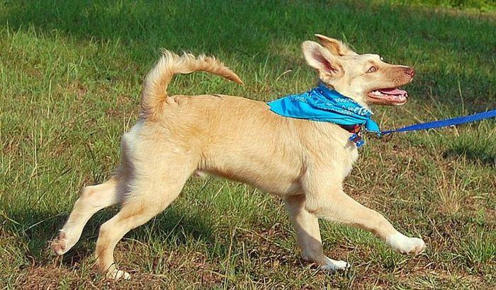 Francis the Dog (30 pics)