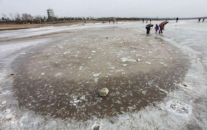 Real Ice Fishing (9 pics)