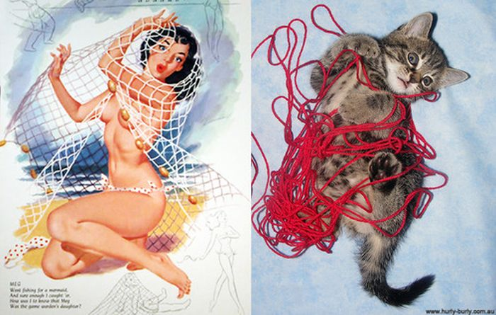Cats That Look Like Pin Up Girls (55 pics)