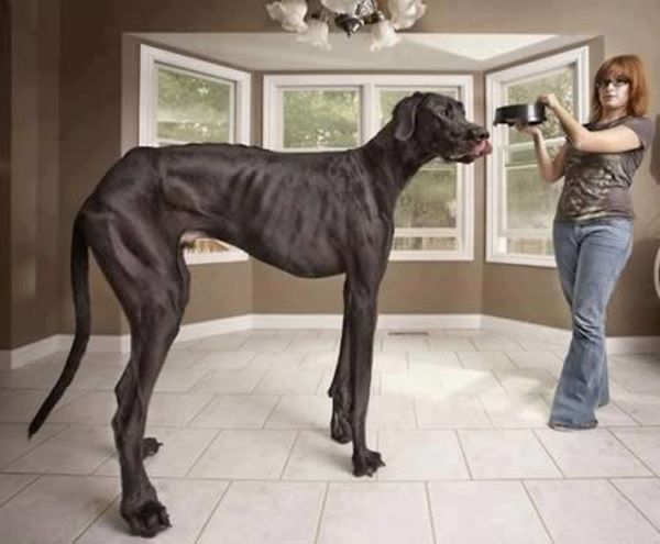 Unbelievable Animal Photos That Are Not Photoshopped (12 pics)