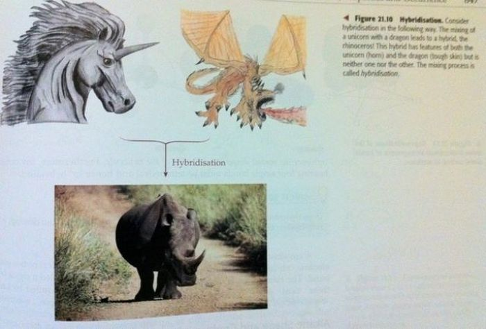 Strange Things In Textbooks (18 pics)