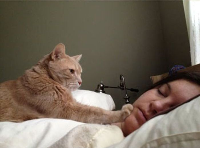 How to Wake People Up If You Are a Cat (4 pics)