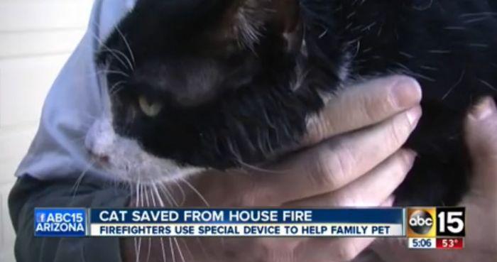 Rescuing a Cat (5 pics)