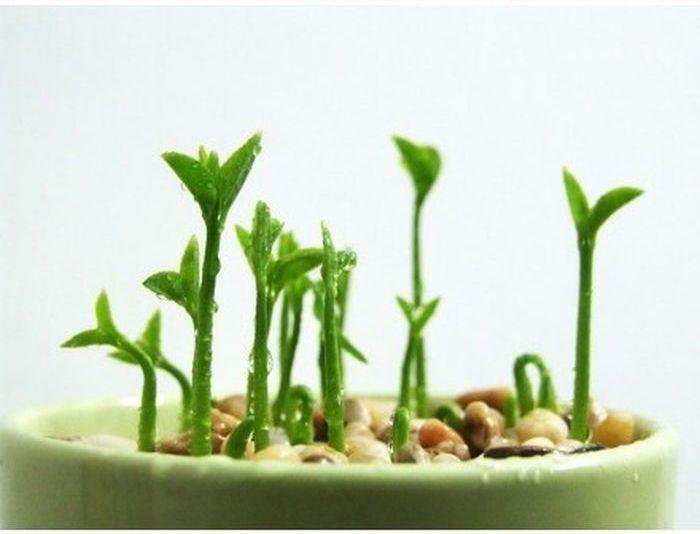 Как вырастить лимон из семечек в домашних