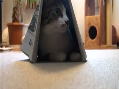 Funny Cat and His House