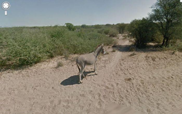 "Google Street View Donkey ""Accident"" in Botswana (11 pics)"