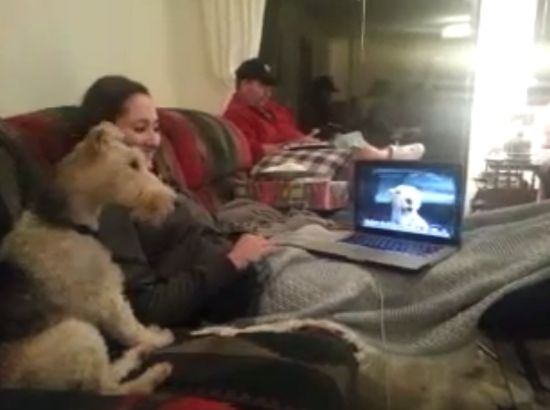 When Your Dog Can Skype