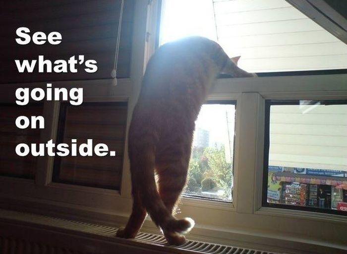 Minik the Wonder Cat (14 pics)