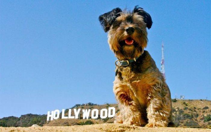 Oscar the Traveler (27 pics)