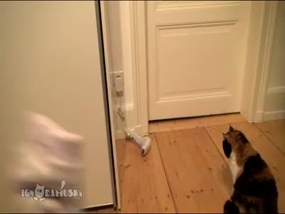 Cats Afraid of Socks