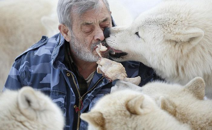 Dining with Wolves (15 pics)
