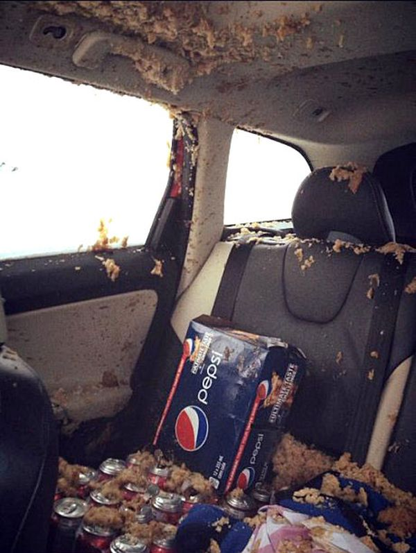 Never Leave Cans of Soda in Your Car... (3 pics)