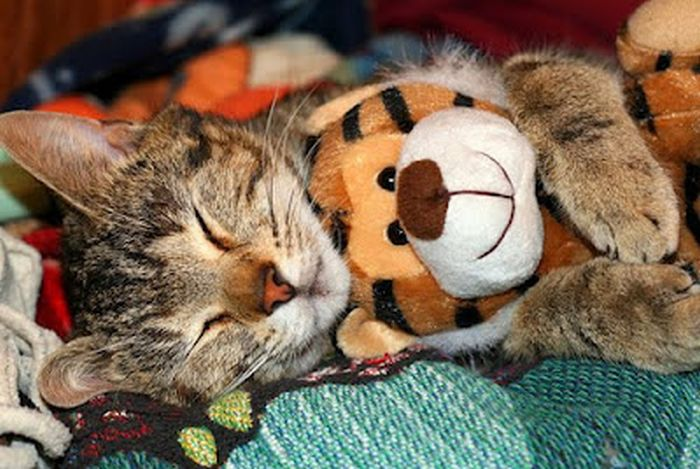 Cats with Stuffed Animals (97 pics)