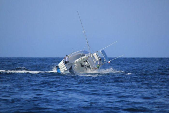 Fish vs. Boat Battle (7 pics)