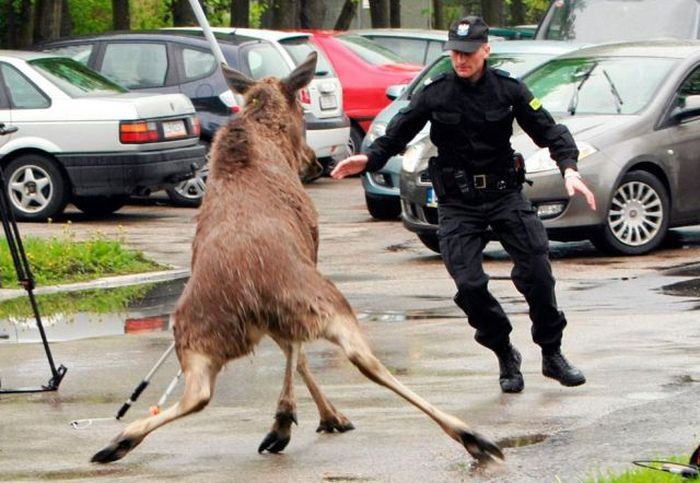 Cops from Around the World (84 pics)