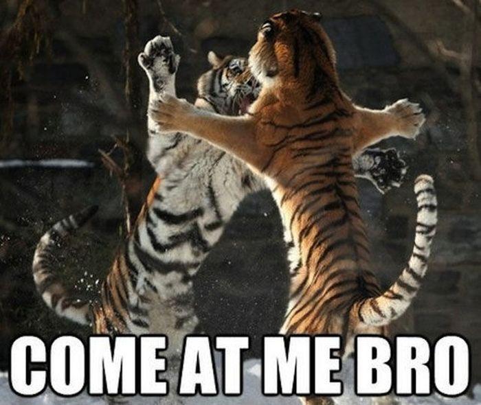 Come At Me Bro (37 pics)