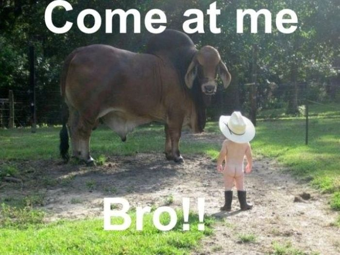 Come At Me Bro (37 pics)