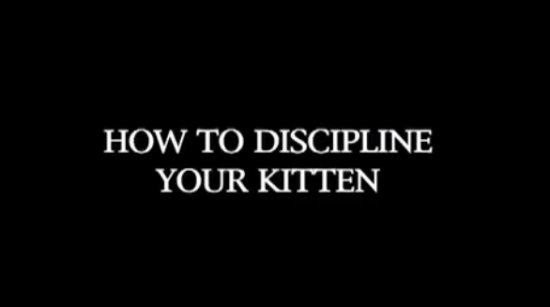 Instruction on How to Discipline Your Cat