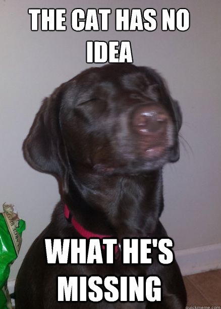 Funny Dog Memes (50 pics)