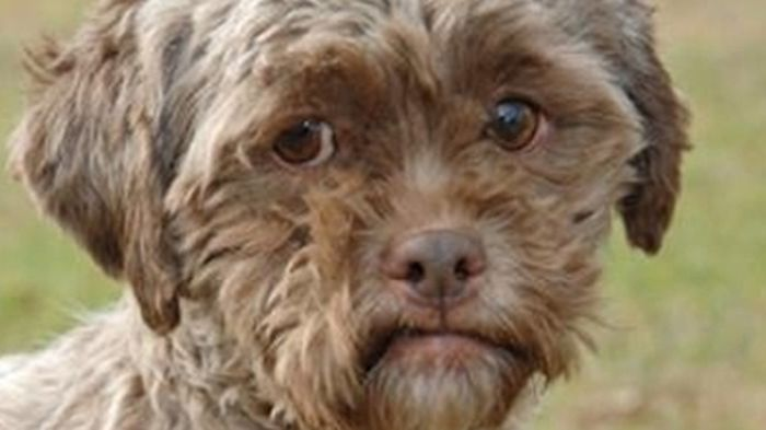 This Dog Has The Face of a Man (4 pics)