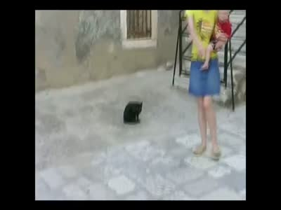 Cat Attacks a Baby