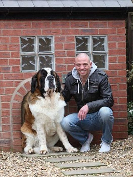 Dog Lives in a Replica of His Owner's House (10 pics)