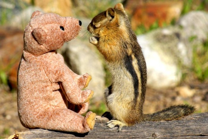 Chipmunk in Love with a Teddy Bear (5 pics)
