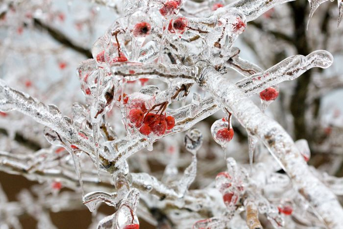 Freezing Rain Aftermath (40 pics)