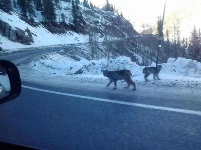 Things You Don't See Every Day (42 pics)