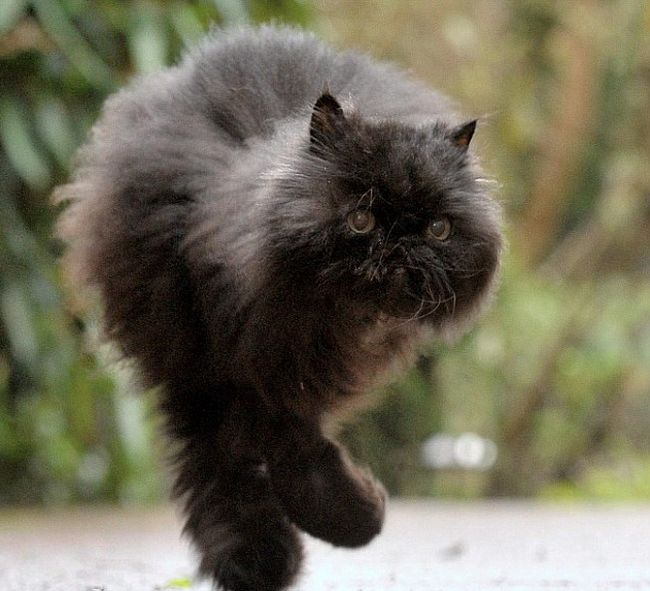 Caffrey the Cat (9 pics)