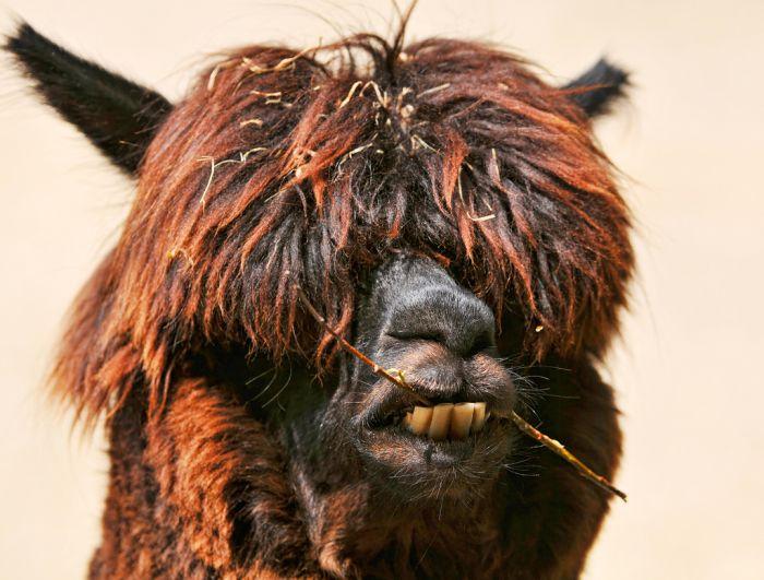 Funny Looking Animals (23 pics)