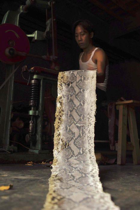 Посмотрим как выглядит производство продукции из змеиной кожи в провинции Восточная Ява, Индонезия.