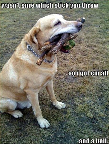 Funny Captions (30 pics)